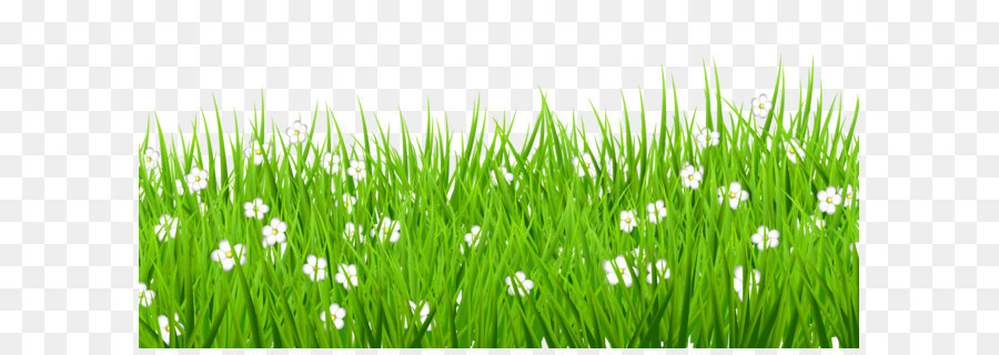 Lawn clip art transparent grass with white flowers clipart png lawn clip art transparent grass with white flowers clipart mightylinksfo