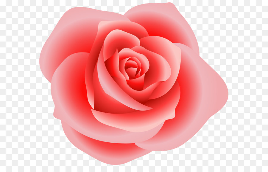 Large Red Rose Clipart Png Download
