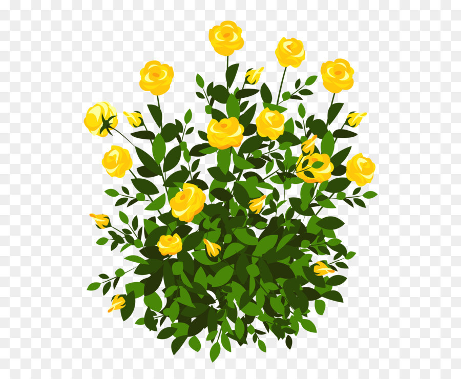 Rose Shrub Flower Clip Art Yellow Rose Bush Png Clipart