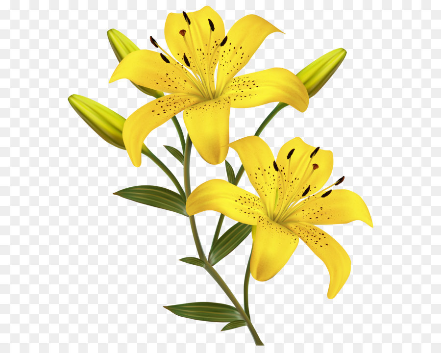 Flower yellow easter lily clip art yellow lilies png clipart image flower yellow easter lily clip art yellow lilies png clipart image mightylinksfo