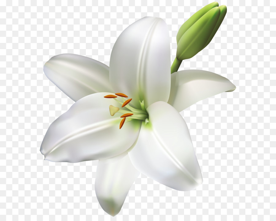 Industry Service Floristry Product Manufacturing Lily Flower