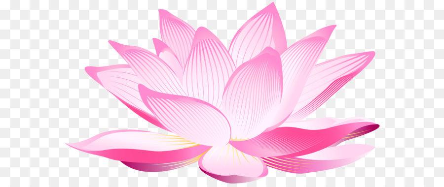 Nelumbo Nucifera Pink Petal Wallpaper Lotus Flower Png Clip Art
