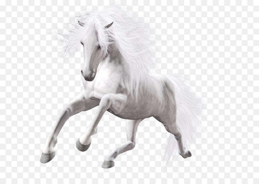 horse white stallion
