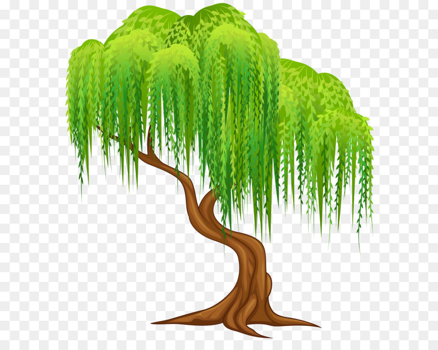 Weeping willow Tree Wall decal Clip art - Willow Tree Transparent ...