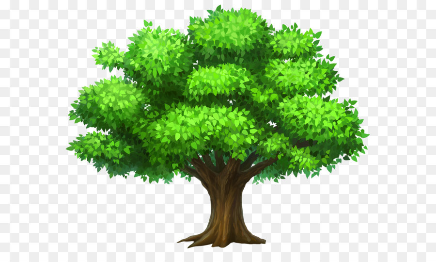 Tree Oak Clip Art Oack Tree Png Clipart Picture Png Download