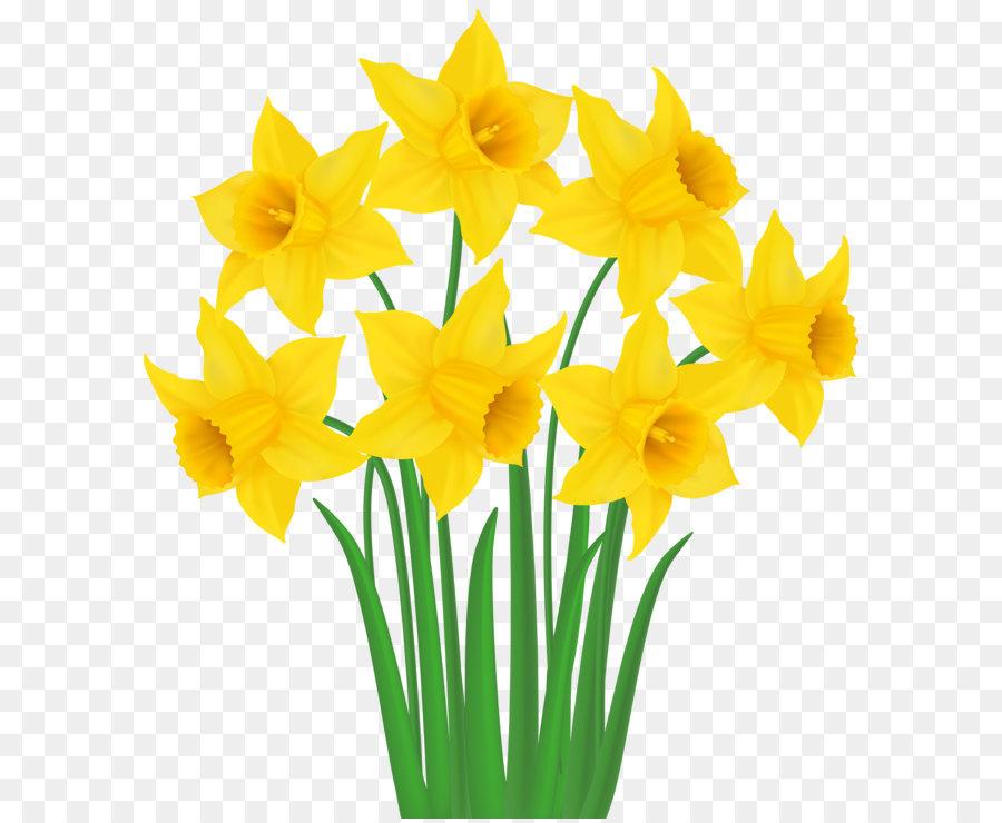 Narciso Clip Art Los Narcisos Amarillos Png Transparente Imagen - Narcisos-amarillos