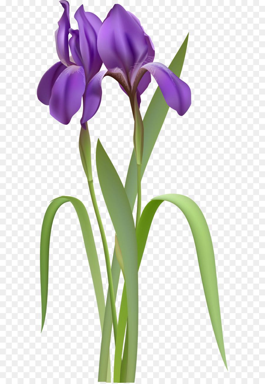 Iris Versicolor Clip Art Iris Spring Flower Png Clipart Png
