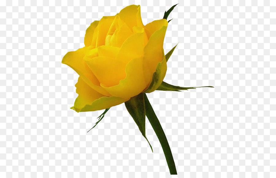 whisky yellow rose distilling clip art transparent yellow rose rh kisspng com yellow rose border clipart long stem yellow rose clipart