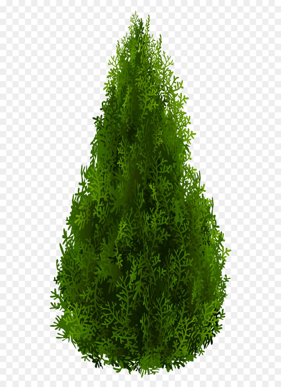 Shrub Tree Spruce Clip Art Cypress Png Clipart Picture