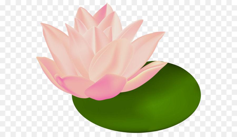 nymphaea alba le bassin aux nymph as clip art water lily rh kisspng com
