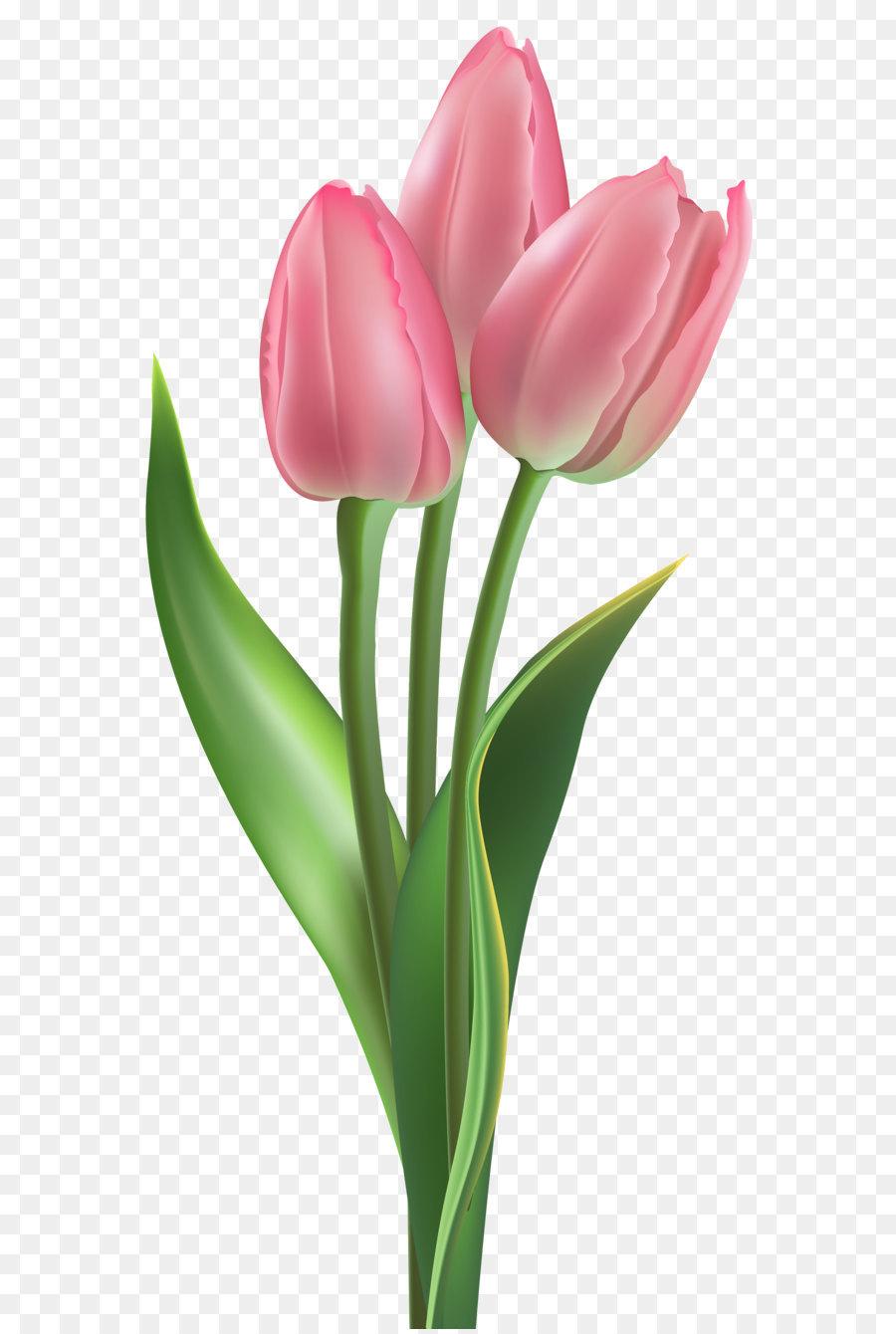 Tulip flower pink clip art soft pink tulips png clipart image png tulip flower pink clip art soft pink tulips png clipart image mightylinksfo