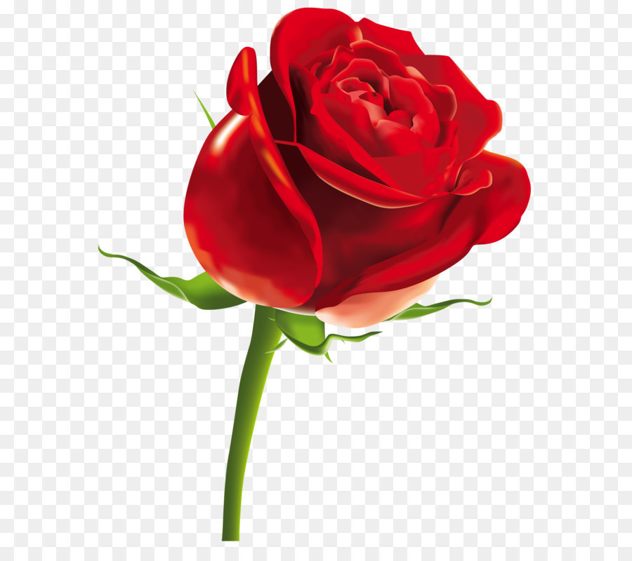 Rose Scalable Vector Graphics Computer File