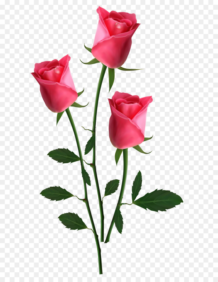 Pink Flowers Rose Beautiful Transparent Pink Roses Png Clipart
