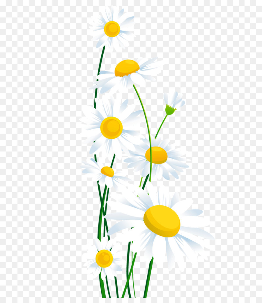 common daisy clip art transparent white daisies png clipart png