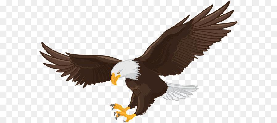 Bald eagle Clip art - Eagle PNG Clip Art Formatos De Archivo De ...