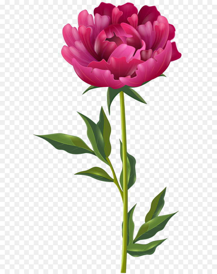 Peony Clip Art Pink Peony Png Clip Art Image Png Download 4576