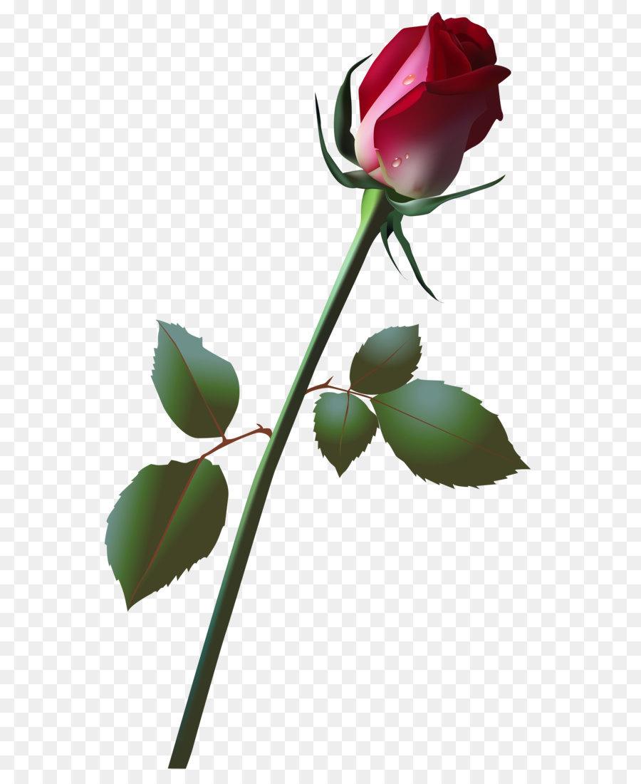 Bocciolo Di Rosa Clip Art Bellissimo Bocciolo Di Rosa Png Clip Art