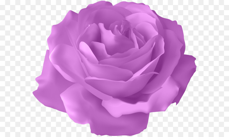 blue rose flower purple rose transparent png clip art image png