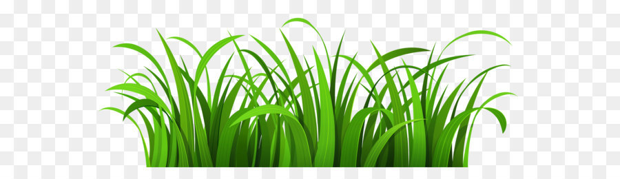 blog clip art grass patch png clipart png download 6000 2247 rh kisspng com grass clip art pictures grass clip art black and white