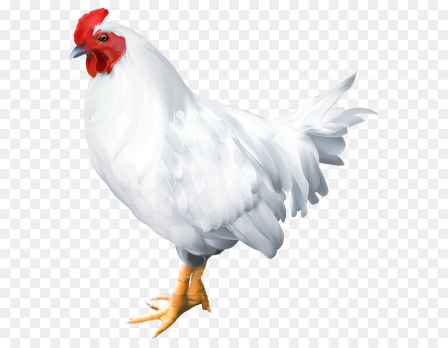 solid white bird rooster poultry white rooster png clip art image