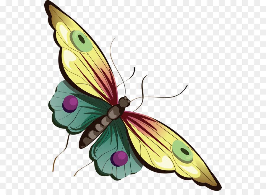 Butterfly Cartoon Clip Art Cartoon Gelb Und Blau Schmetterling