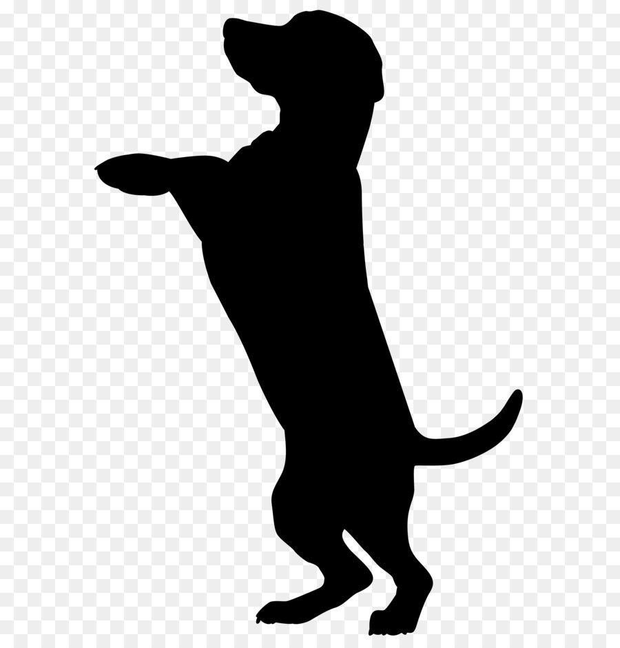Is A Cat A Vertebrate Or Dog