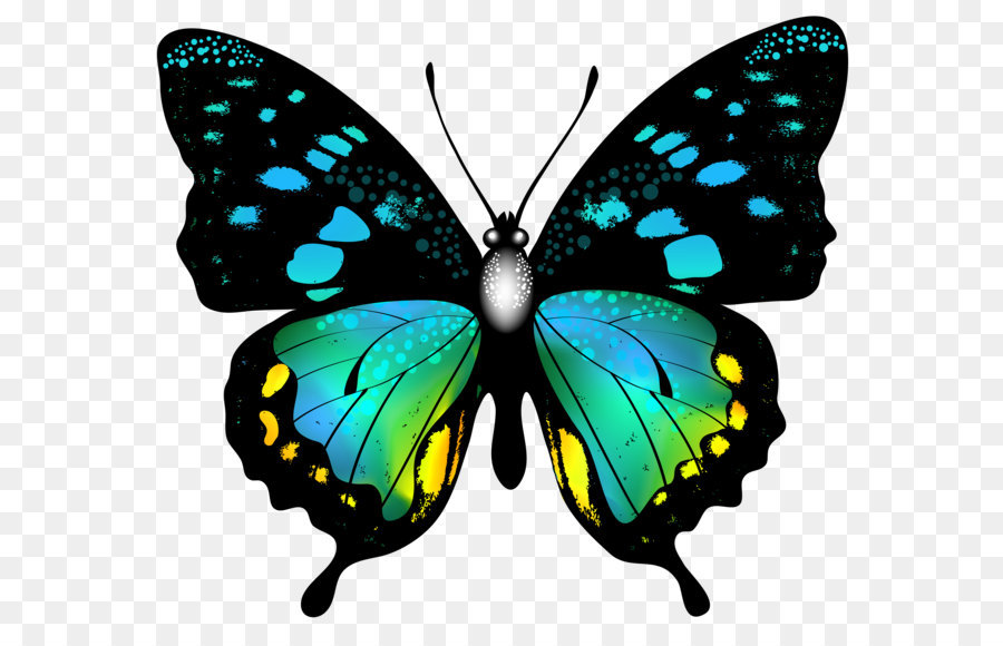 Butterfly Clip Art Blue Colorful Butterfly Png Clip Art Image Png