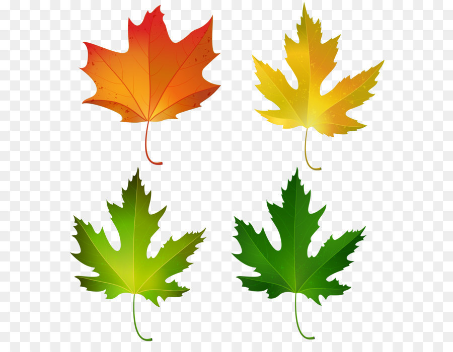 maple leaf autumn leaf color sugar maple clip art fall maple rh kisspng com fall tree clip art black and white fall tree clipart