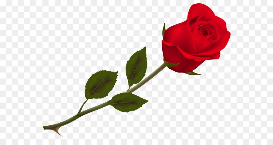 Single Rose Clipart: Transparent Beautiful Red Rose PNG