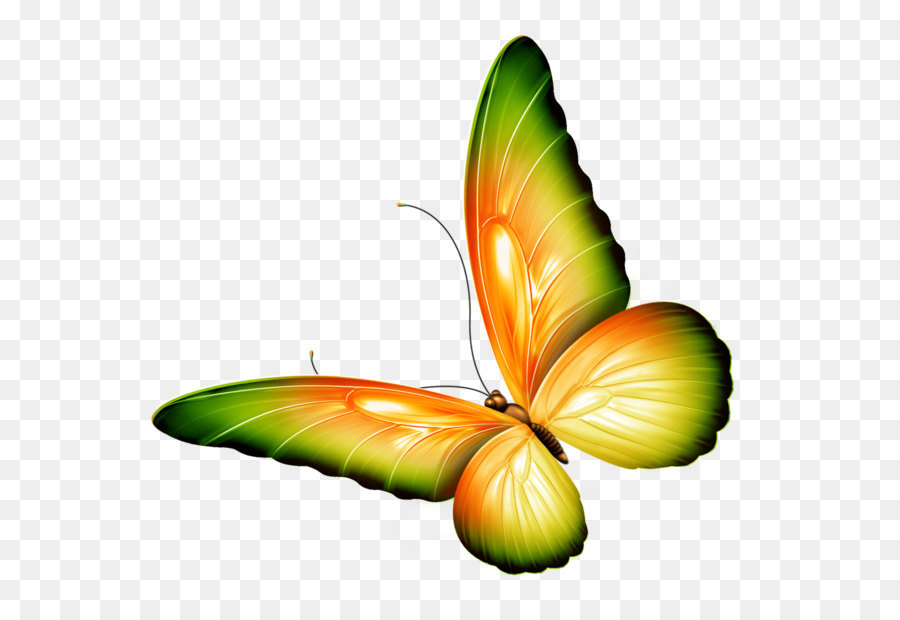 butterfly clip art yellow and green transparent butterfly clipart rh kisspng com