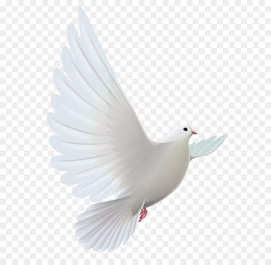 pigeons and doves bird prayer clip art white dove