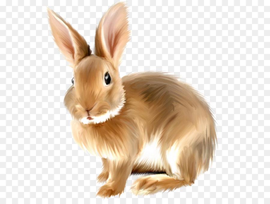 angora rabbit clip art painted bunny clipart png png download rh kisspng com bunny rabbit clipart black and white bunny rabbit png clipart