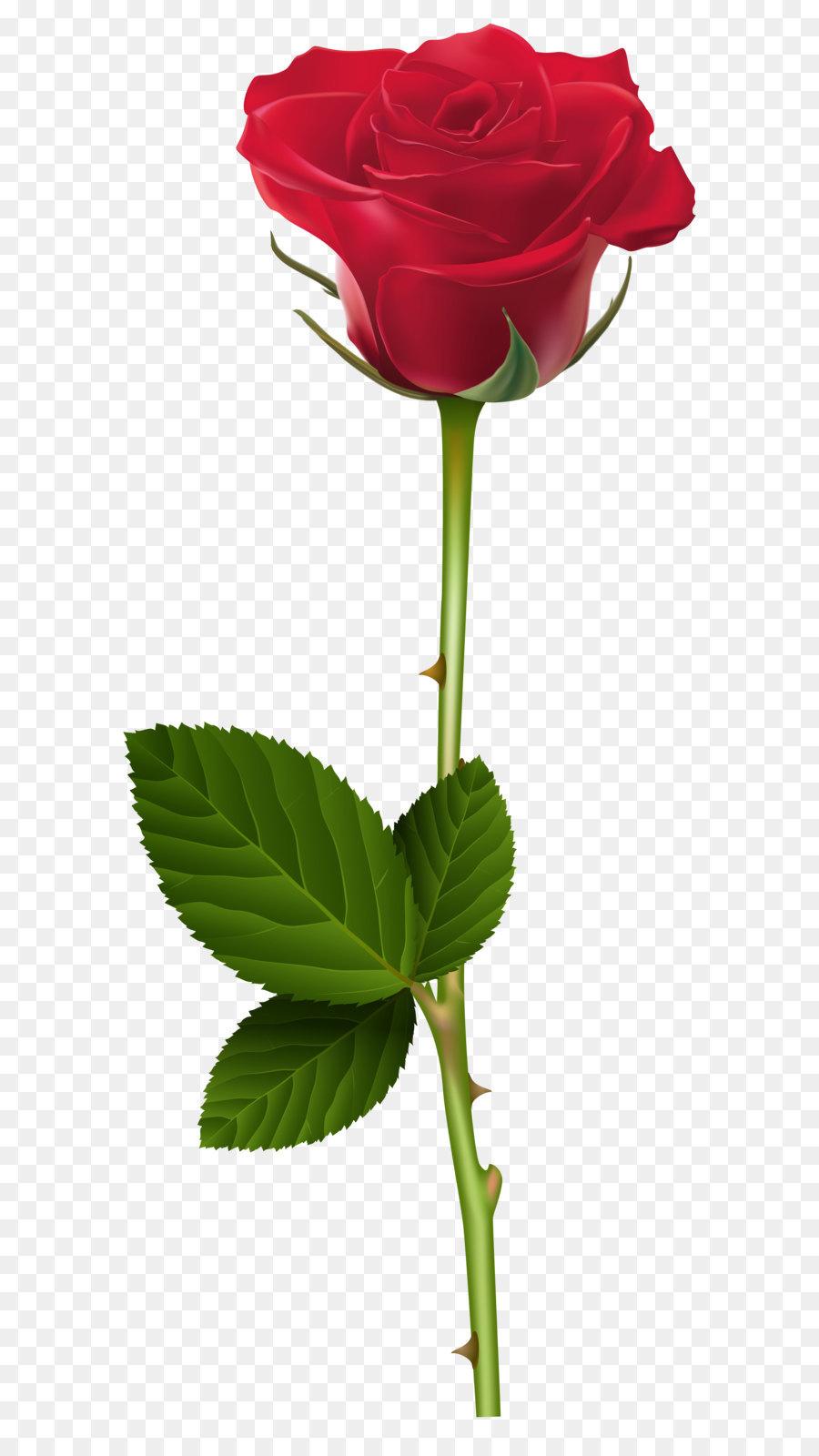 Rose Clip Art Red Rose Png Transparent Clip Art Image