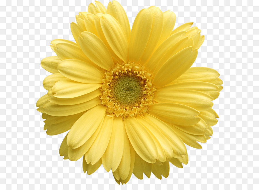 Flower yellow stock photography clip art yellow gerber daisy flower yellow stock photography clip art yellow gerber daisy clipart mightylinksfo