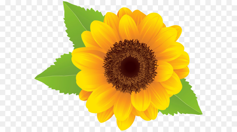 sunflower png clip art image png download 80006139