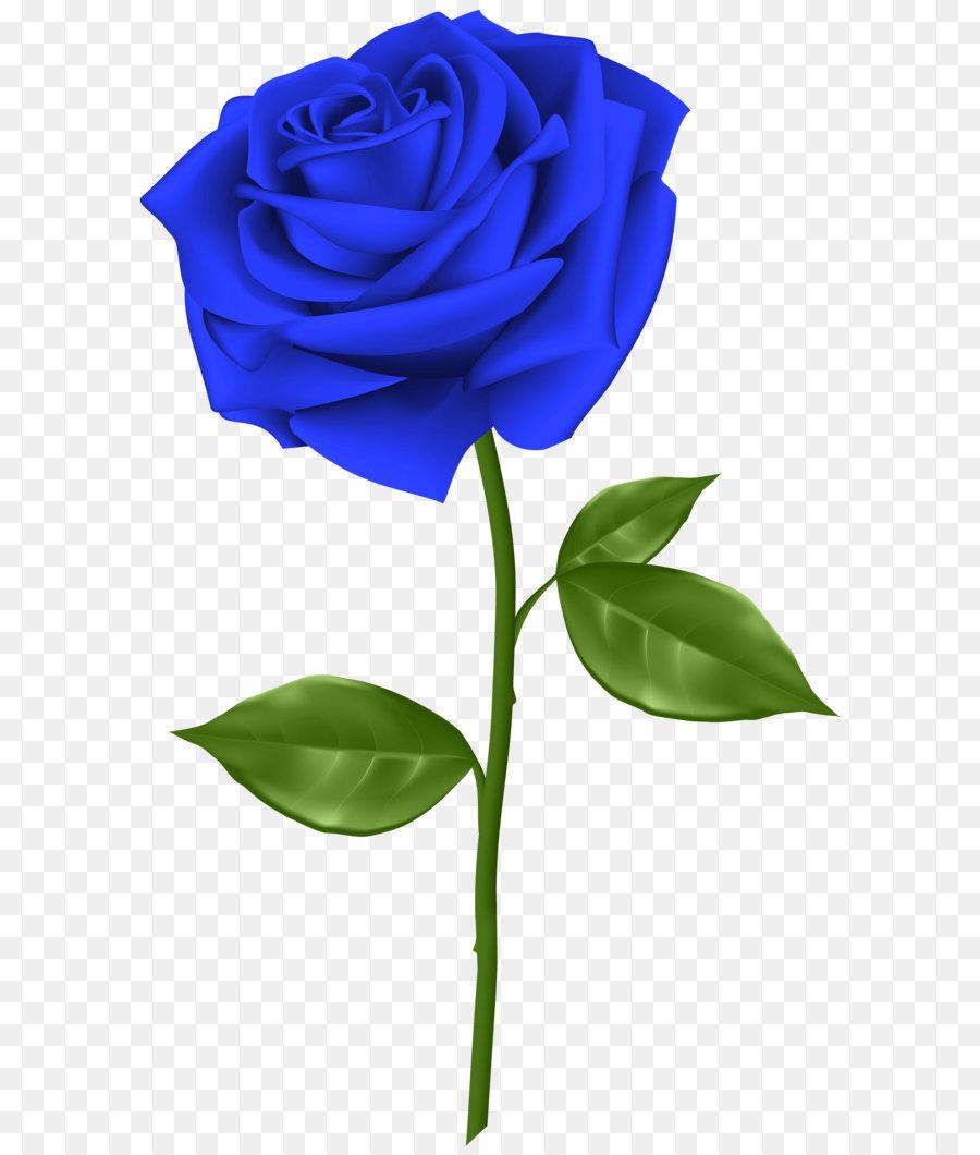 Blue Rose Flower Clip Art Blue Rose Transparent Png Clip Art Png