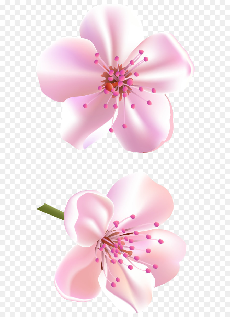Flower Rose Pink Color Spring Pink Tree Flowers Png Clipart Png