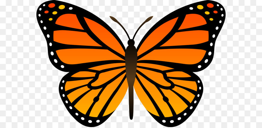 butterfly cartoon clip art orange butterfly png image clip art banners for letterhead clip art banners and scrolls