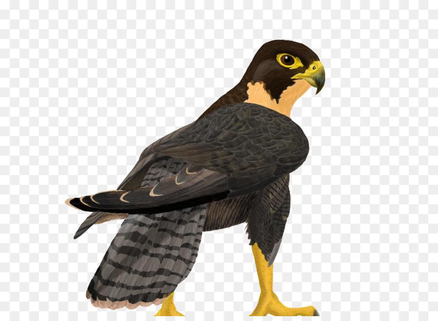 flying falcon clip art - 700×700