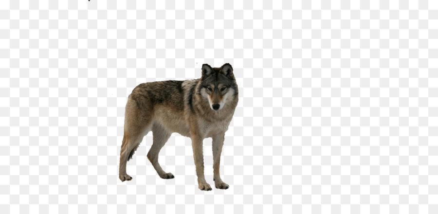Wolf Bilder Kostenlos Downloaden - Kostenlos zum Ausdrucken