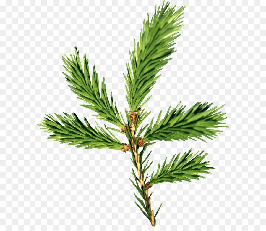 Bild Tannenbaum.Tannenbaum Fichte Zweig Papier Weihnachtsbaum Tanne Png Bild Png