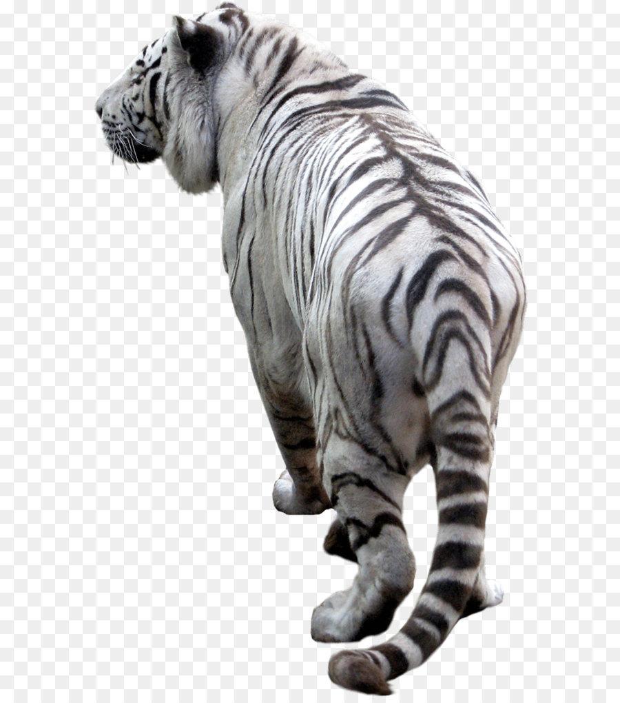 tiger - tiger png image download tigers png download - 740*1152
