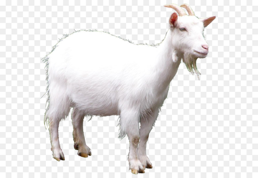 Goat Clip Art Goat Picture Png Download 920 869 Free