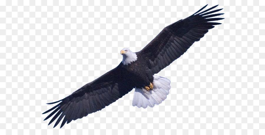 Bald Eagle Clip art - Bald Eagle Free Download Png png download ...