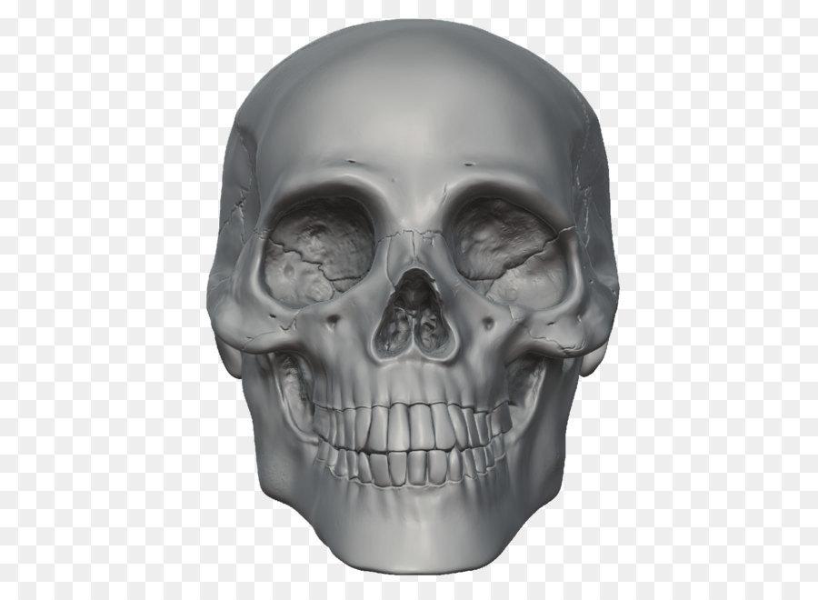 Skull Skeleton Head - Skeleton Head Free Png Image png download ...