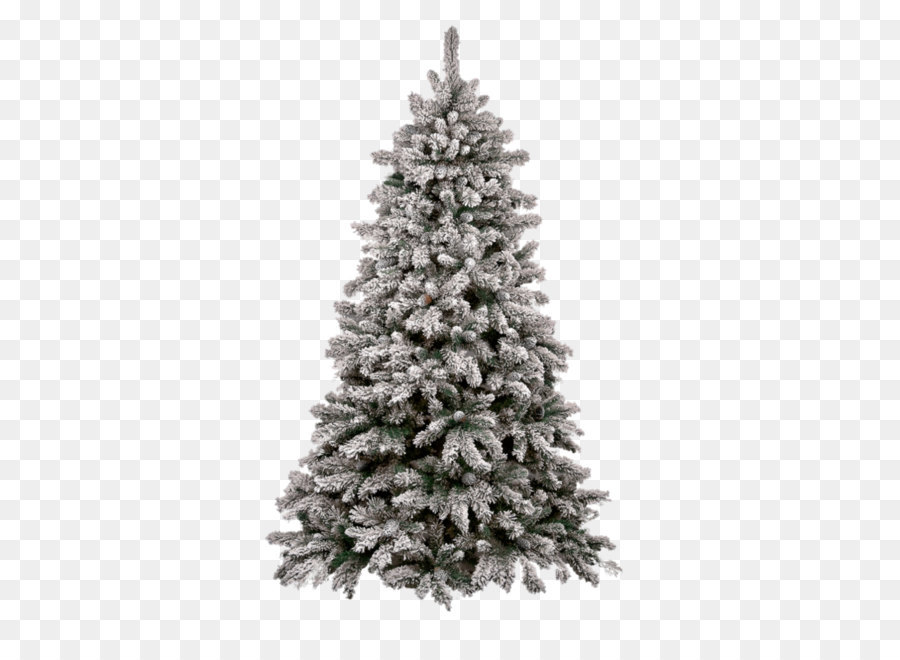 Christmas Fir Png Download 894 894 Free Transparent Christmas