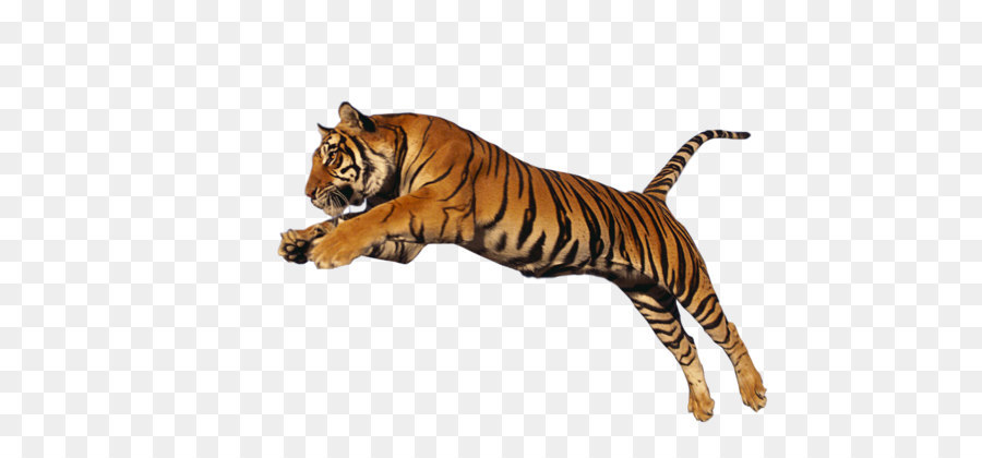 tiger clip art tiger png hd png download 1024 640 free