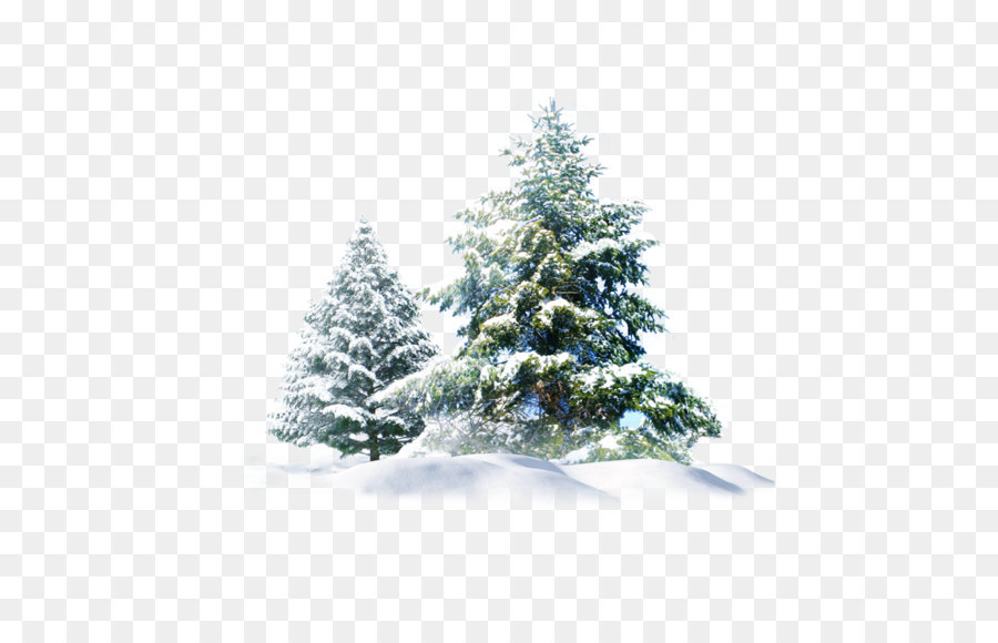 Polar Bear Snow Pine Wallpaper