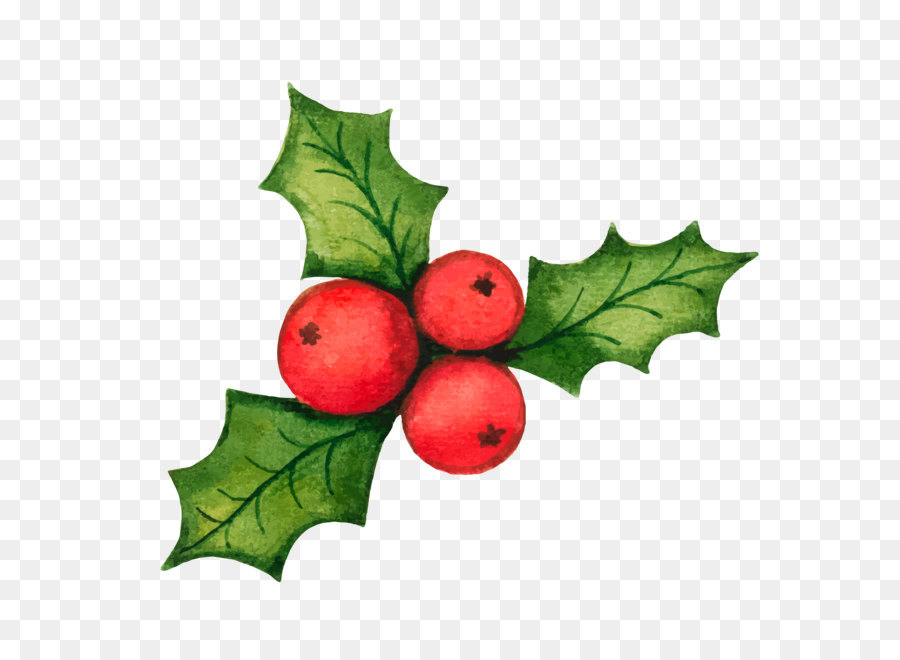 common holly christmas decoration clip art christmas holly decorations vector material - Christmas Holly Decorations
