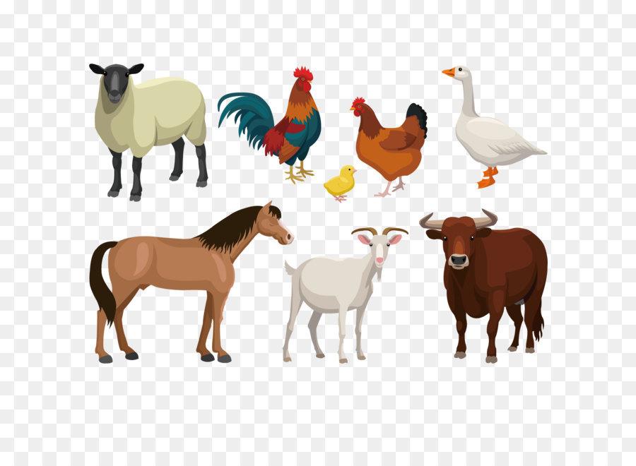 Cattle Goat Sheep Livestock